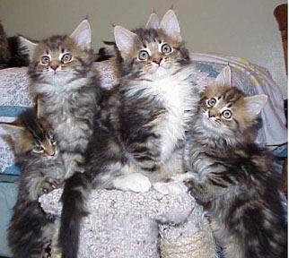 Images Cat111A