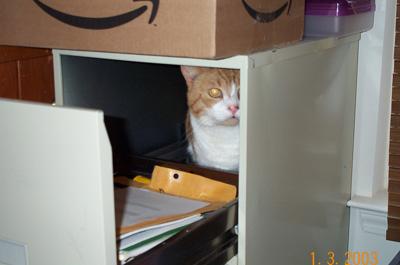 Images Curiouscat