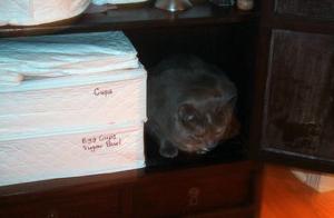Img 257 1445 400 China-Chest-Cat