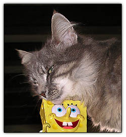 Photos Uncategorized Tinymeepsspongebob